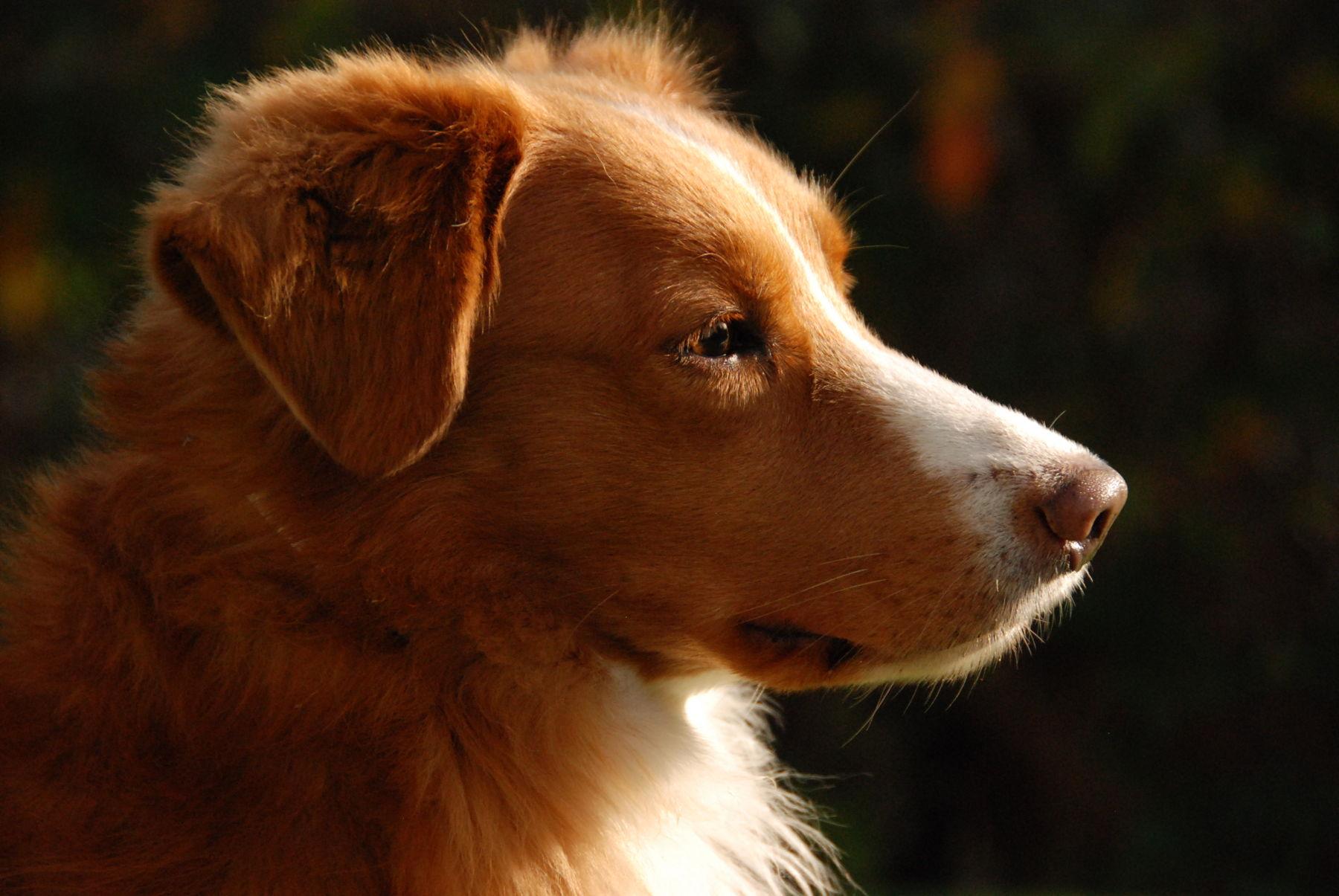 dog Gonzo